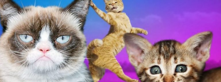 MEOW! ENJOY THE 10 MOST PURRR-FECT CAT VIDEOS